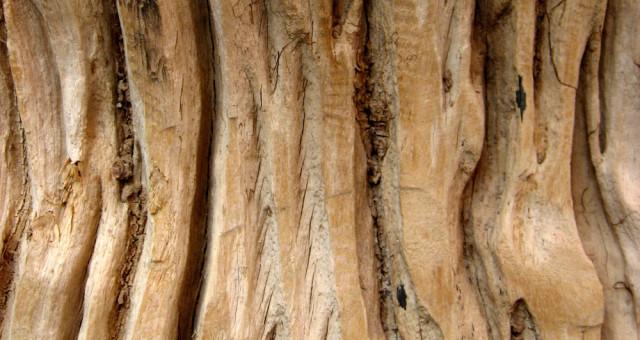 Korkboden Pflege – Für lange Freude an Ihrem Boden
