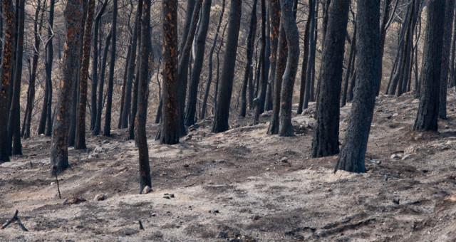 Kork Bodenbelag – ein natürlicher Rohstoff