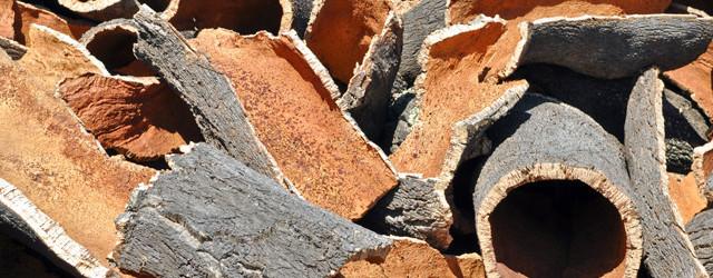 Korkeiche – Ein Baum mit Substanz
